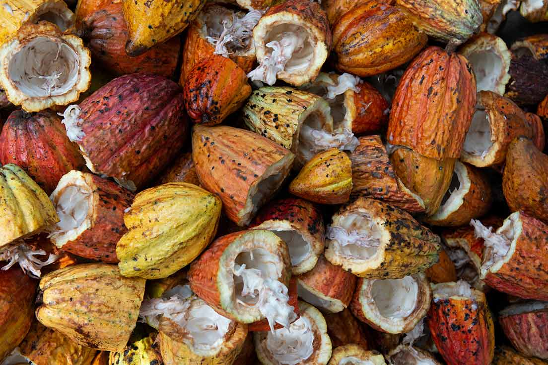 Health Benefits Of Cacao: Are They For Real?